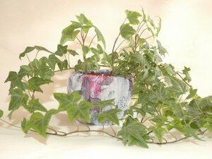 Töpfe für Pflanzen und Kräuter von Leesha - Modell Rosa Lee - Leesha