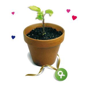 25 junge Bäume (Muttertagskarte) - OxfamUnverpackt