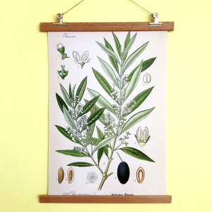 Poster Olive mit Aufhängung - all the things we like