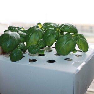 Kräuter-Zucht für zuhause 'Basilikum' - Ecoltivo