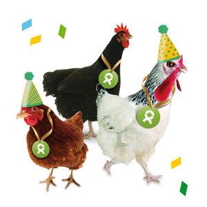 Gackernde Hühner (Geburtstagskarte) - OxfamUnverpackt