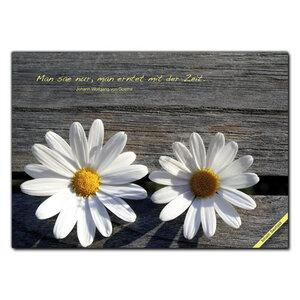 Fiorini Saatpostkarte - Margerite  5er Set - Fiorini