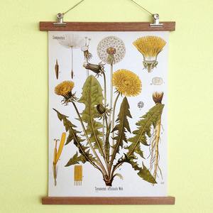 Poster Dandelion mit Aufhängung - all the things we like