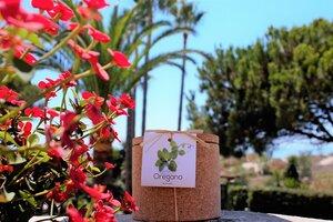 Grow Kork Oregano Kräuter im Kroktopf  - Life in a bag