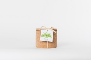 Grow Kork Stevia der Zuckerersatz  im Korktopf  - Life in a bag