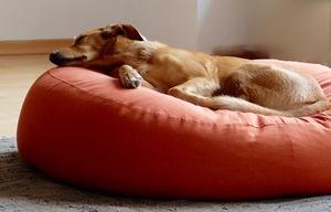 orthopädisches Hundekissen oval 'Granada' S - XL - Grüne Pfote®