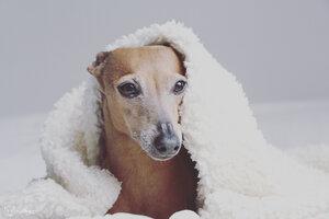 """kuschelige Hundedecke aus Bio Teddyplüsch """"Island' S-XL - Grüne Pfote®"""