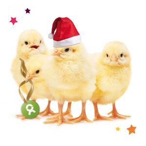 Küken (Weihnachten) - OxfamUnverpackt