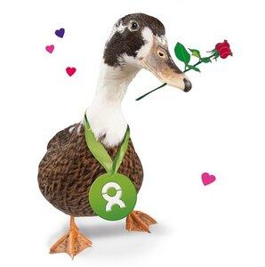 Ente (Valentinskarte) - OxfamUnverpackt