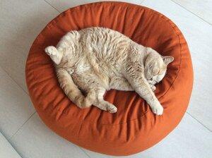 orthopädisches Katzenbett oval 'Granada' S - M - Grüne Pfote®