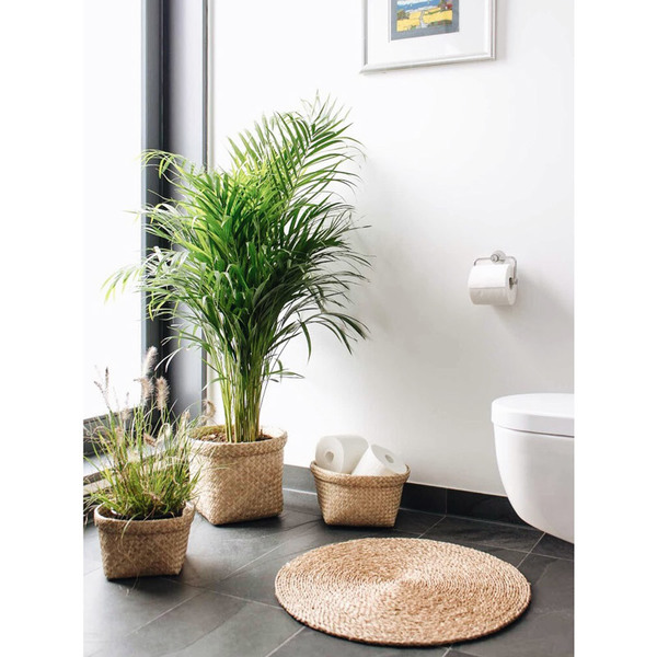 studio tr runder seegras teppich coi s avocadostore. Black Bedroom Furniture Sets. Home Design Ideas