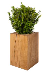 Baumstamm Pflanzkübel Eiche Massivholz, natürlicher Blumenkübel - GreenHaus