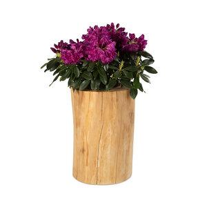 Baumstamm Pflanzkübel aus Buche Massivholz, natürllicher Blumenkübel - GreenHaus